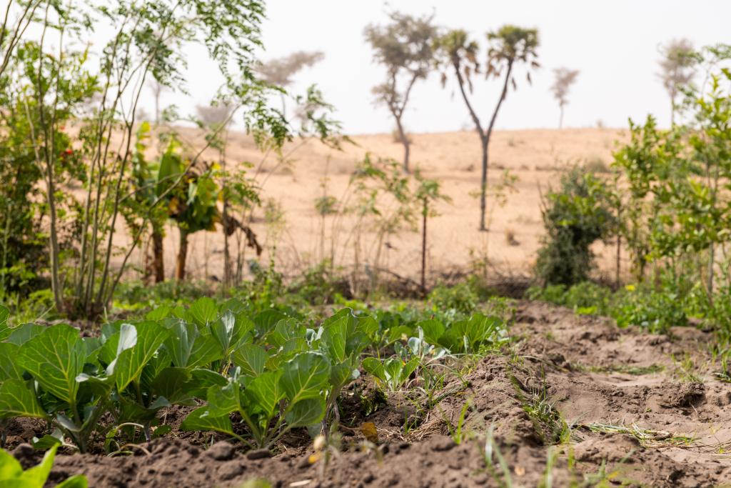 Dettagli di un orto realizzato grazie al nostro progetto